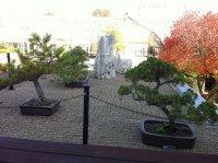 piękny ogródek