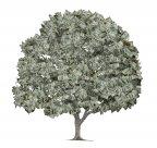 Pieniądze czasem rosną na drzewie